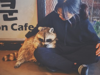 Those raccoons are so cute