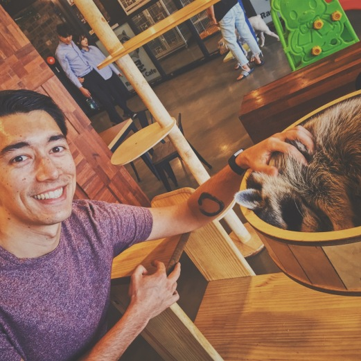 In the Raccoon Cafe
