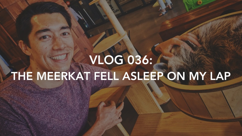 Vlog 036: The Meerkat Fell Asleep On My Lap